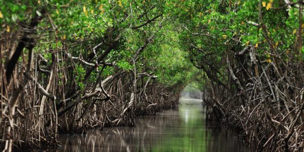 蓝色债券:大自然保护协会的海洋拯救计划
