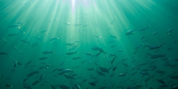 改变海洋化学结构能否延缓气候变化?