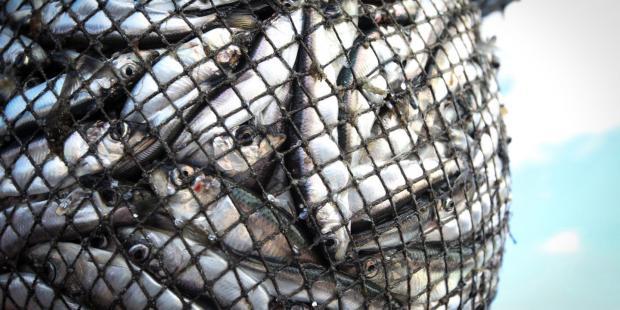 《1986》系列播客: 中国与全球鱼类现状