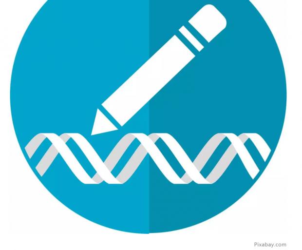 全面评估单碱基编辑技术mRNA脱靶风险