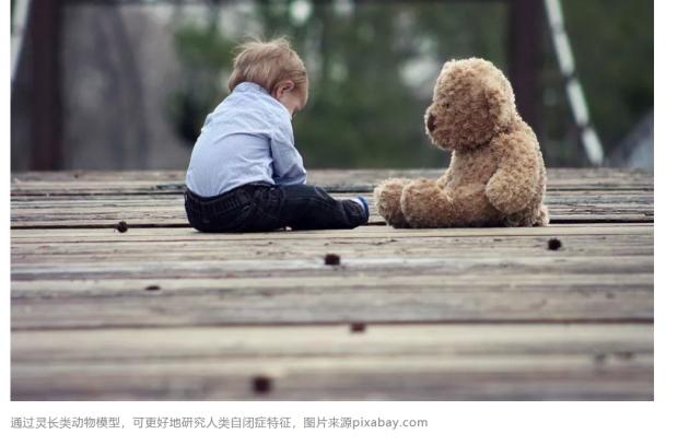 中国学者建立新的灵长类自闭症动物模型