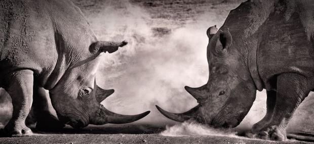 """别低估气候风险,它可能才是全球经济中最大的""""灰犀牛""""事件"""