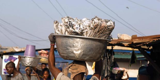 """加纳每年因""""赛科""""捕捞损失千万美元"""