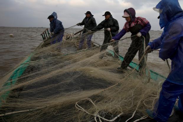 《1986》系列播客:中国的过度捕捞史