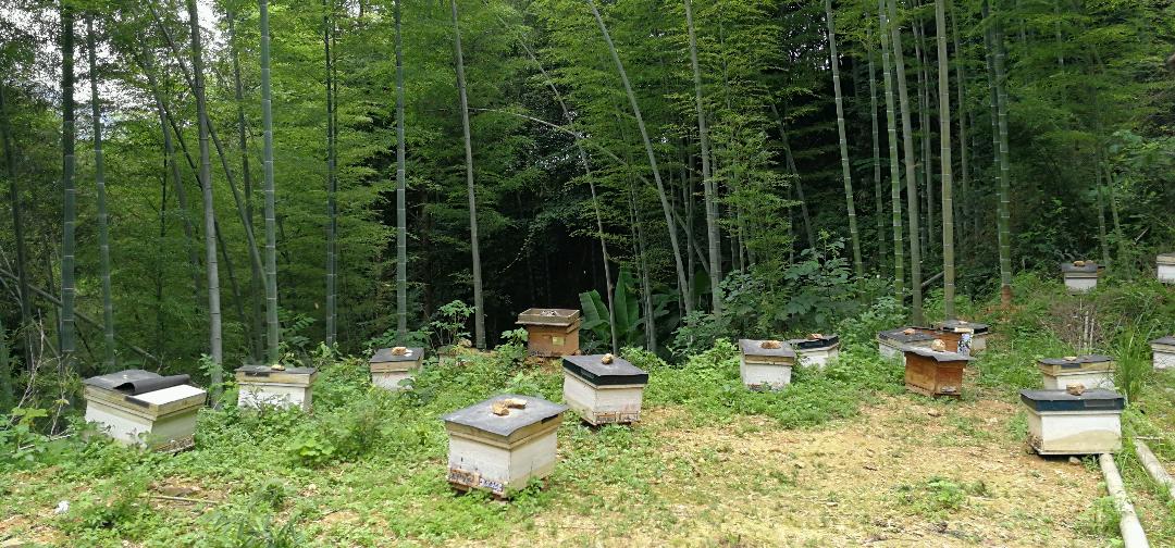 天牧养蜂与自然经济观