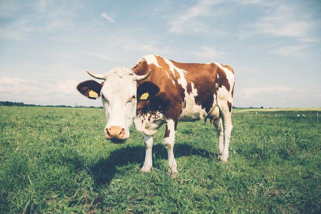 连美国人都不爱喝牛奶了?美最大奶厂迪恩股价怎么跌破一美元?