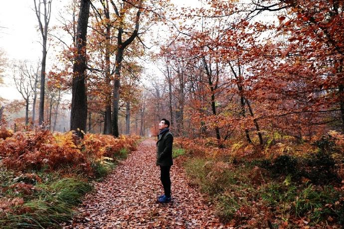 枫丹白露,秋日的私语