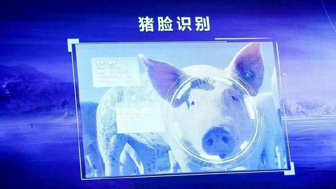 互联网巨头们为何都跑到猪场上演科技战