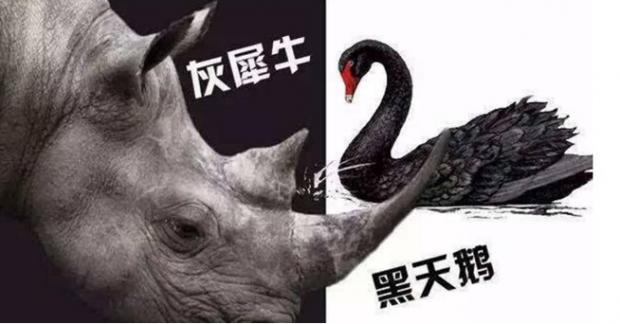 黑天鹅和灰犀牛之后呢?
