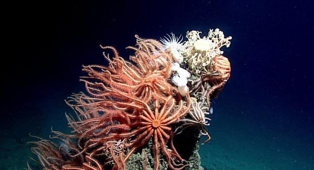 公海条约:海洋遗传资源之争