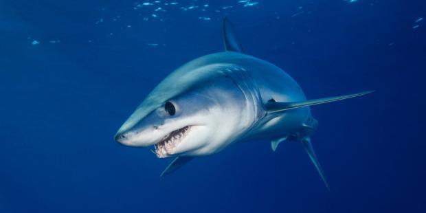 2019:鲨鱼的生死分水岭
