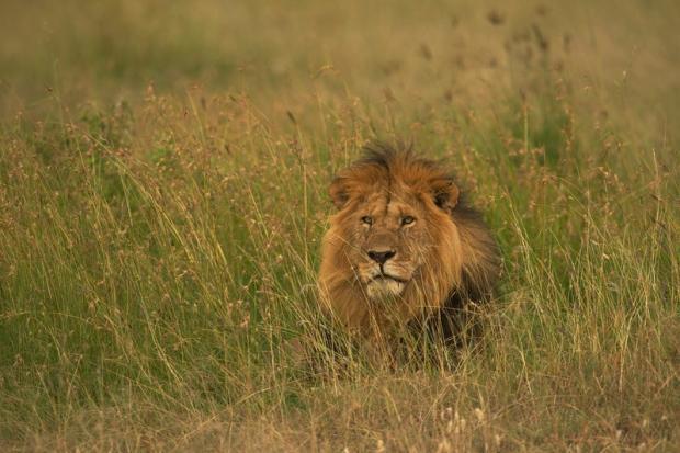 CITES缔约方大会聚焦野生动植物贸易问题