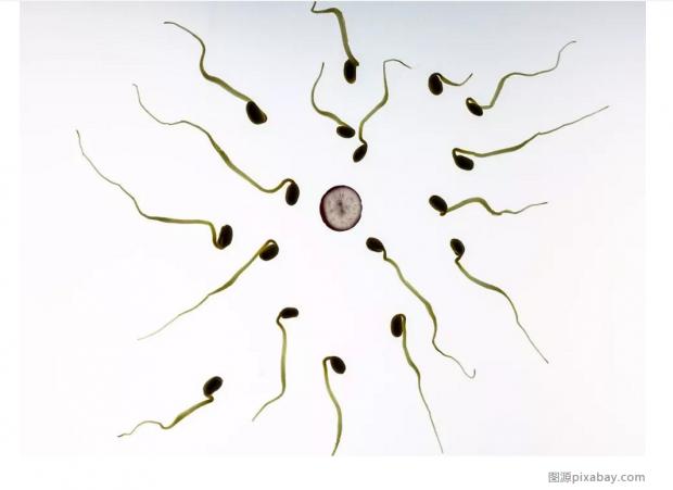 北大团队新研究绘制了生命早期表达图谱