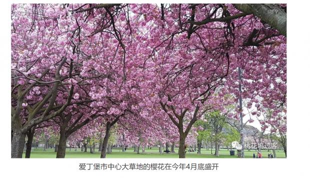 拯救了日本樱花的英国人