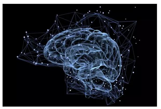 物理评论快报(PRL)刊文揭示大脑功能多样性的起源