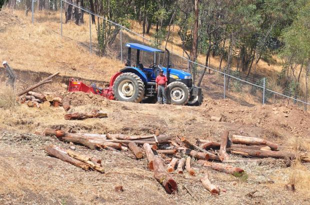 中国有能力帮助墨西哥解决非法砍伐活动