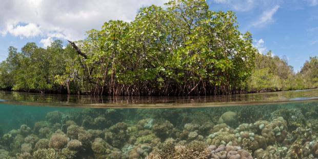 沿海社区急需提升气候适应能力
