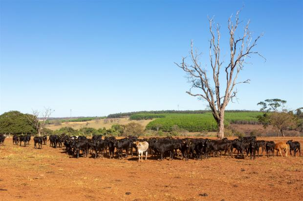 牛肉生产与亚马逊大火