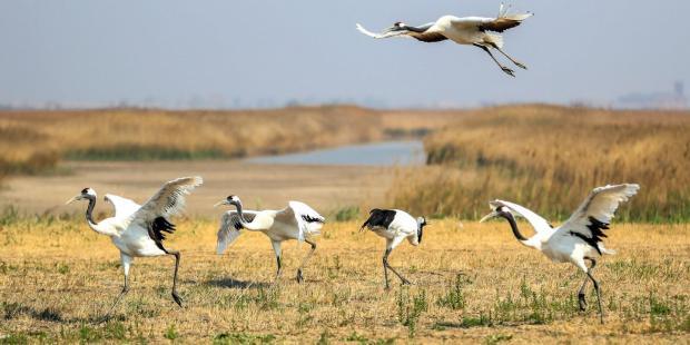 珍惜中国滨海湿地 保护海洋生物多样性