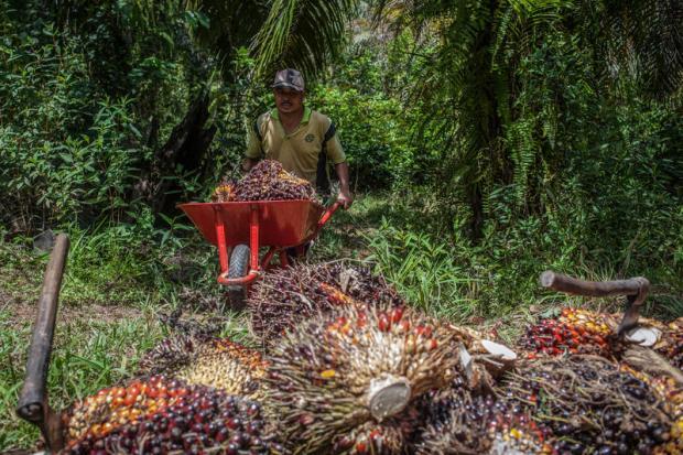 中印两国成为棕榈油新前沿