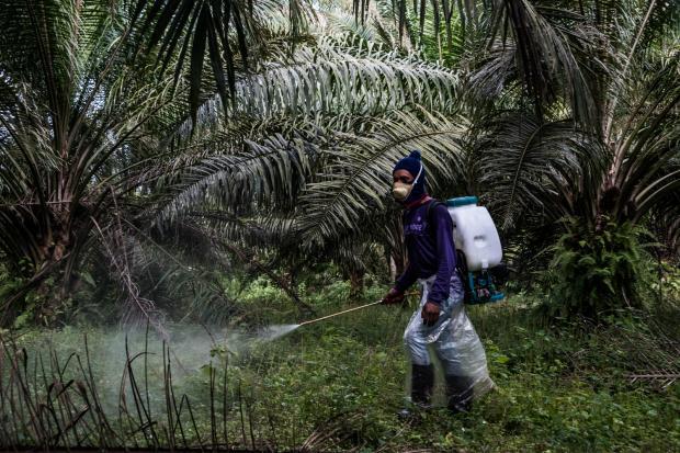 """棕榈油怎样才能被认证为""""可持续""""?"""
