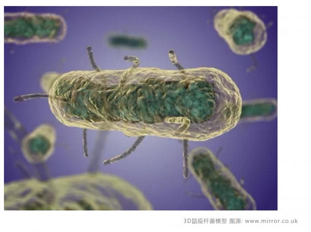 曾每年致死数百万人 鼠疫在今天有多危险?