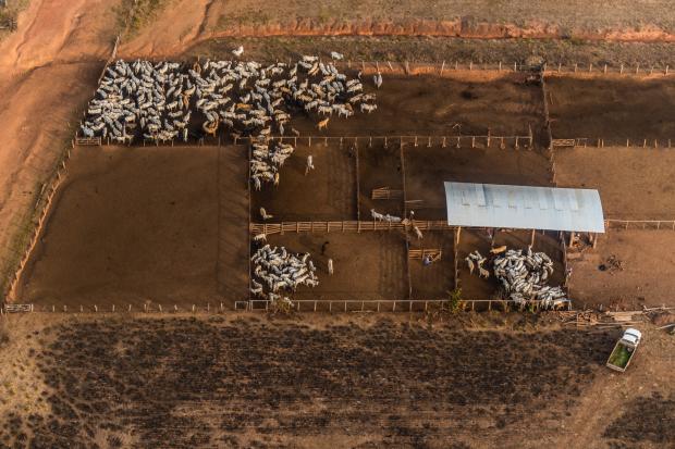 牛肉需求增加与亚马逊森林砍伐