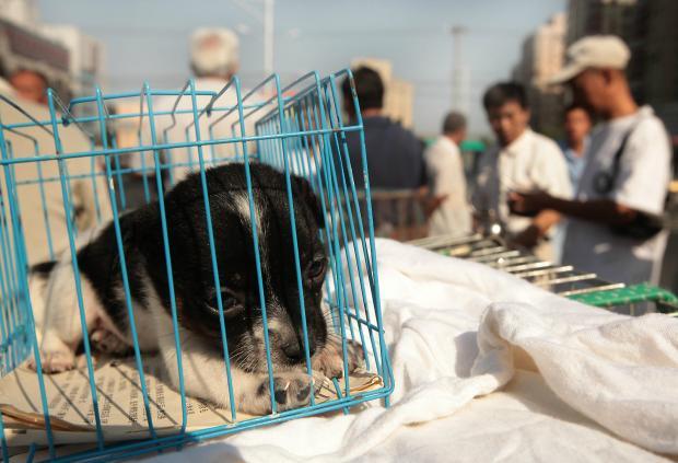 地下宠物市场:宠物经济另一面