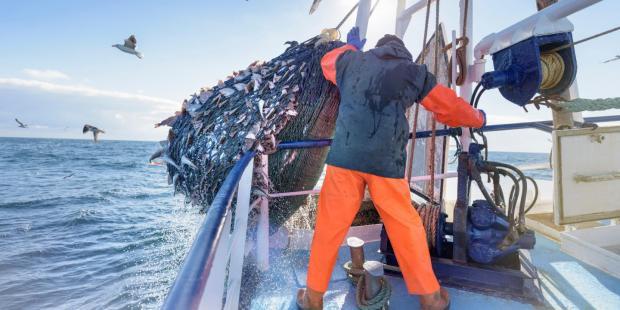 渔业补贴:环境代价知多少