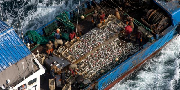 远洋渔业必须更加透明化