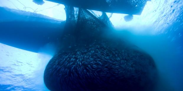 2020年对海洋至关重要