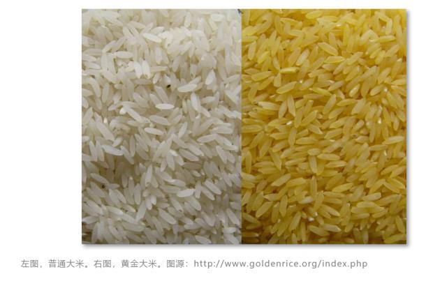 黄金大米在菲律宾获批上市 何时商业化种植未知