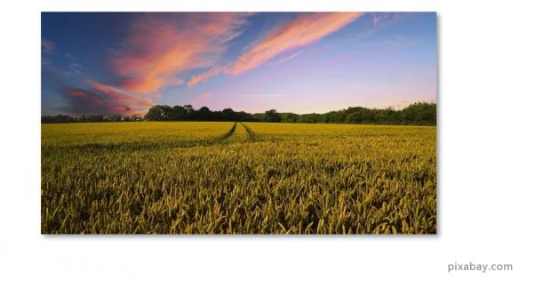 北大邓兴旺:我为何回国办现代农学?