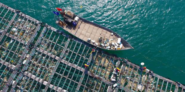 """""""厦门模式""""是中国海洋塑料治理的未来吗?"""