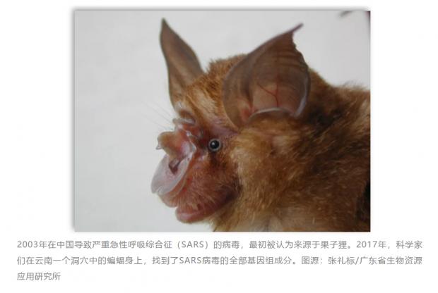 溯源:为何新型病毒总是指向野生动物?