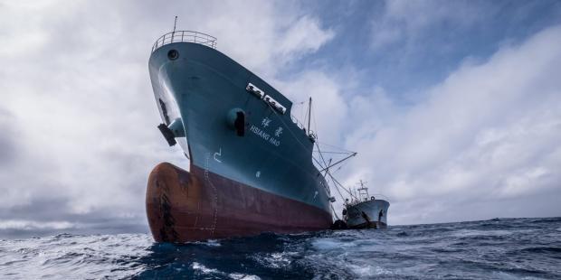 2020,中国修法打击非法捕捞