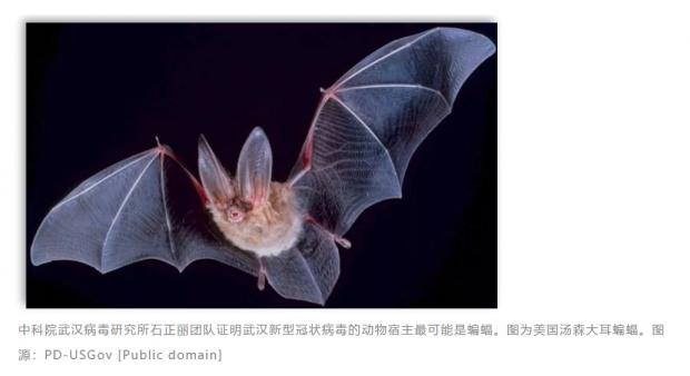 就在武汉,中科院团队揭示蝙蝠可能为新型冠状病毒宿主