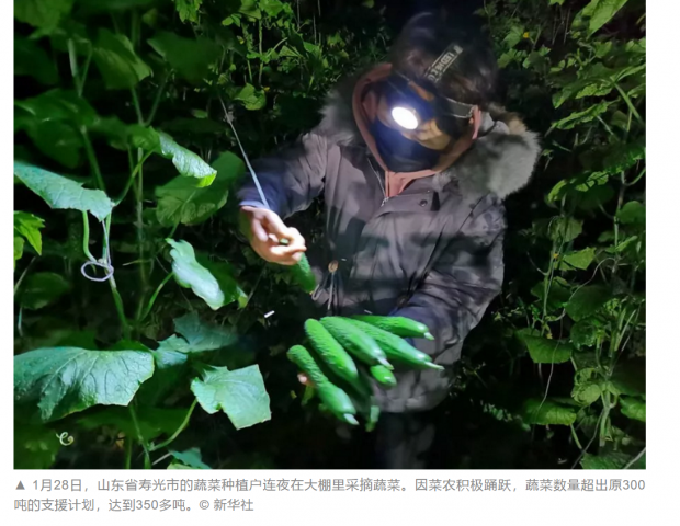 """""""寿光蔬菜在武汉"""":本可成为慈善捐赠创新案例"""