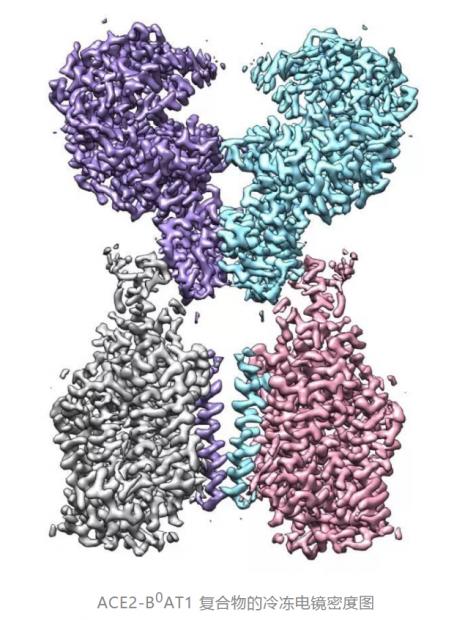 中国结构生物学家发力:揭示新冠病毒侵染人体细胞瞬间