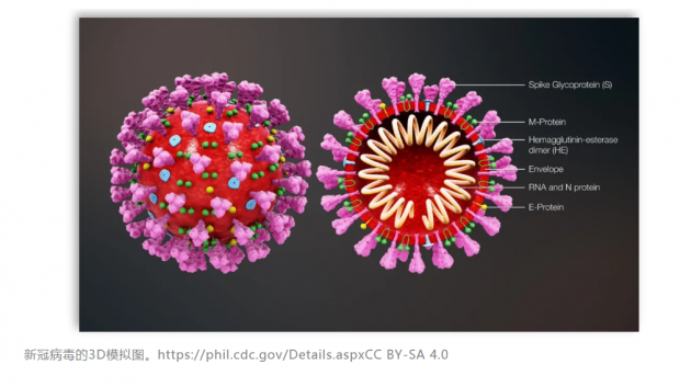 追问:亚洲人和吸烟者更易感新冠肺炎?