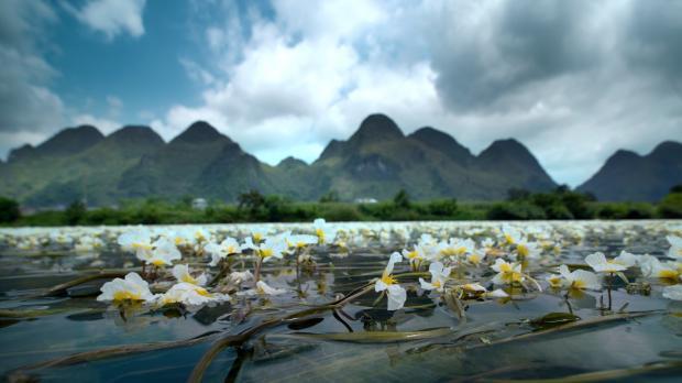 """""""软实力""""纪录片展现中国生物多样性"""