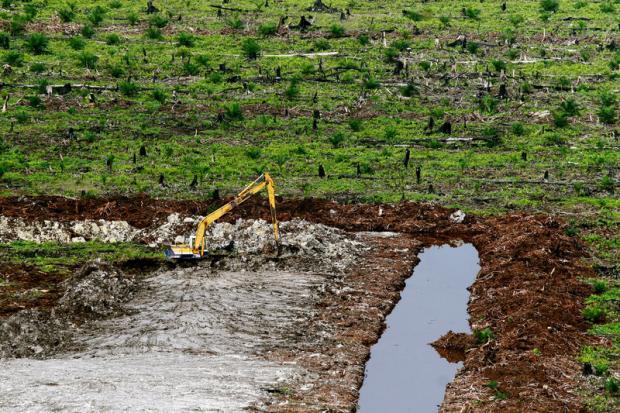 棕榈油种植园扩张的气候代价