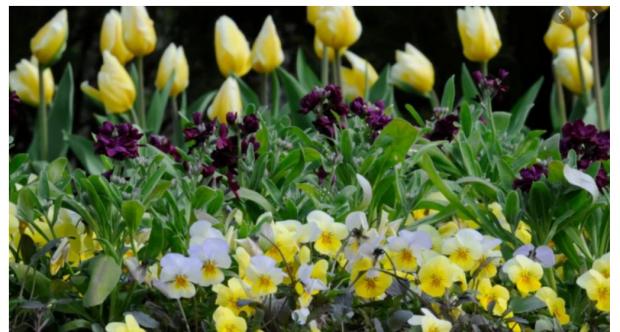 春假第一天:股市、新冠、花园、天气、抄底?