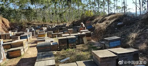 """""""我的蜜蜂都死完了"""" 疫情下的蜂农转场困境"""