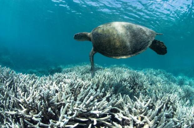 为气候发声   在自然中寻找答案
