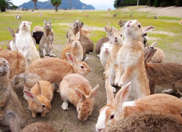 押沙龙:一只心满意足的兔子