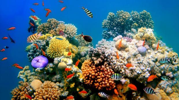 Nature警告:全球气候变暖将造成生物多样性断崖式下降