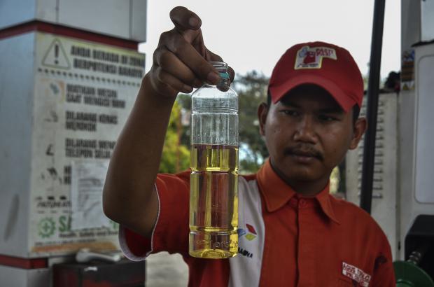 棕榈油燃料崛起,东南亚雨林何去何从?