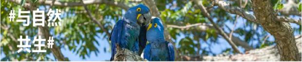 """与自然共生 原来真的有蓝精灵,他们还喜欢""""植树"""""""
