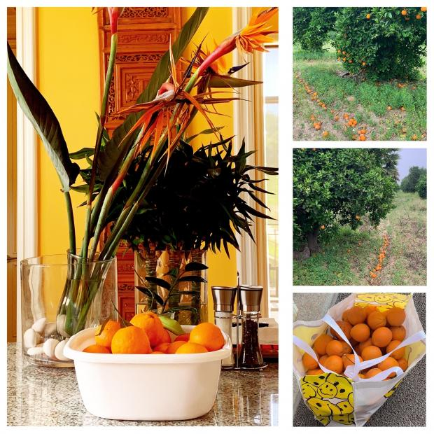 陈燕妮:无论橙子还是贾维茨